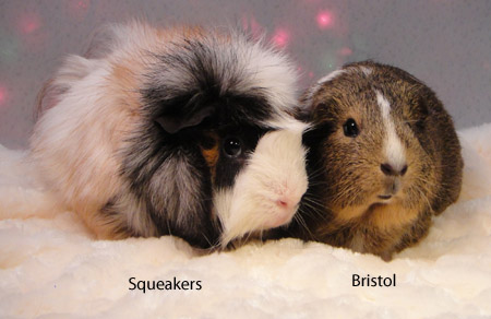 Bristol & Squeakers